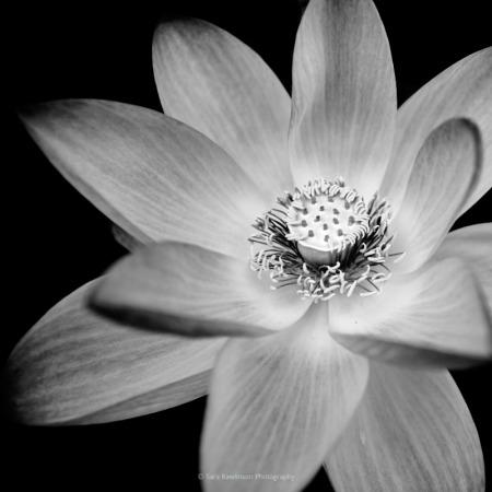 Sara Rawlinson flower