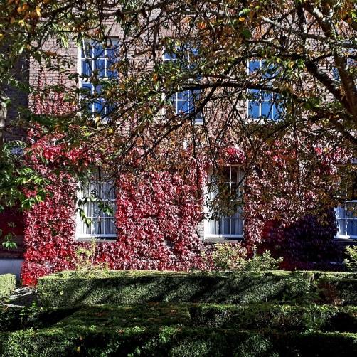 Autumn colour in Trumpington Street Cambridge