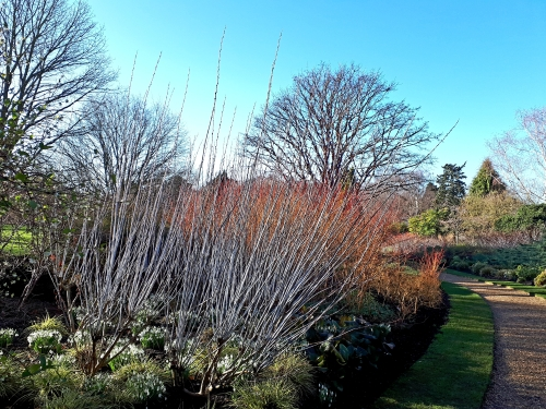 Winter Garden at Cambridge University Botanic Garden