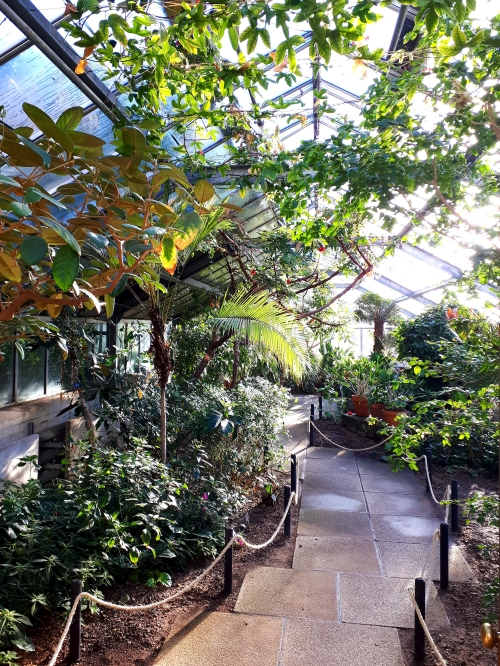 Glasshouse at Cambridge University Botanic Garden
