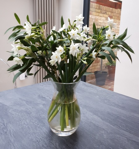 Paperwhites in my kitchen