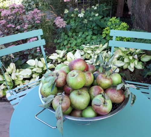 Laxtons Superb apples
