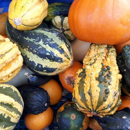 Gourds at Cambridge Market